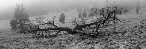 Baum im Nebel nach geschlagen vom Blitz Lizenzfreies Stockfoto