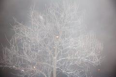 Baum im Nebel, verziert mit Frost Stockfotografie