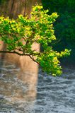Baum im nebelhaften Sonnenlicht Lizenzfreie Stockbilder