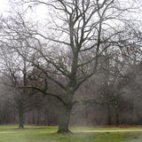 Baum im November Stockfoto