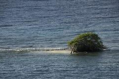 Baum im Ozean Stockfotos