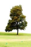 Baum im Park Stockbilder