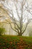 Baum im Park Lizenzfreies Stockfoto