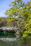 Baum im Park Lizenzfreie Stockbilder