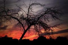 Baum im Park bei Sonnenuntergang Stockfotos