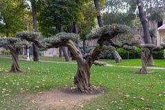 Baum im Park mit grünem Laub lizenzfreie stockfotos