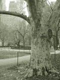 Baum im Park und in den Wolkenkratzern, nyc Stockfotografie