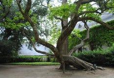 Baum im Park von Märchen Lizenzfreie Stockfotos