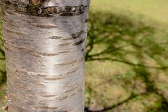Baum im Park zur Frühlingszeit stockfotografie