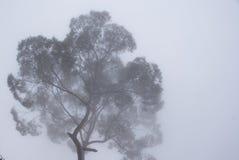 Baum im Rauche Stockbilder