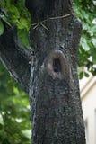 Baum im Regen Stockbild