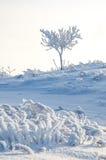 Baum im Reif Lizenzfreie Stockbilder
