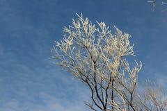 Baum im Reif gegen den Himmel Stockbilder