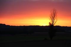 Baum im Schattenbild bei Sonnenuntergang Lizenzfreies Stockbild