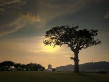 Baum im Schattenbild an der Dämmerung Lizenzfreie Stockfotos