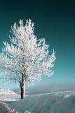 Baum im Schnee Stockfoto