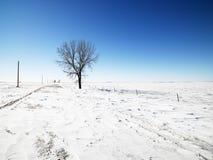 Baum im Schnee. Stockbild