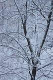 Baum im Schnee lizenzfreies stockfoto