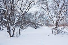 Baum im Schnee Stockbild