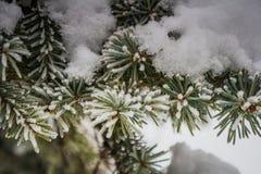 Baum im Schnee Stockfotos