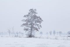 Baum im Schnee auf niederländischem Ackerland während des Winters Lizenzfreies Stockbild
