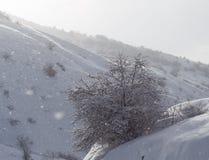 Baum im Schnee in den Bergen Lizenzfreie Stockfotos