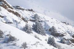Baum im Schnee in den Bergen Stockbild