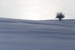 Baum im Schnee an der Dämmerungssonne Stockfotografie