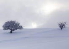 Baum im Schnee an der Dämmerungssonne Lizenzfreie Stockfotos