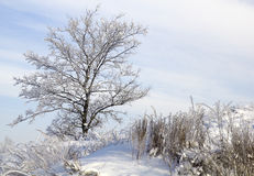 Baum im Schnee gegen blauen Himmel. Winterszene. Lizenzfreies Stockfoto
