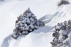 Baum im Schnee im Winter in den Bergen Stockbild