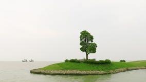 Baum im See Stockfoto