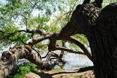 Baum im See Chiemsee Stockbild