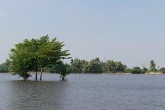 Baum im See mit weißen Wolken im Himmel Stockfotografie