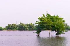 Baum im See mit weißen Wolken im Himmel Stockfotos