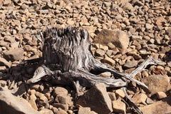Baum im Sepia Stockfotos