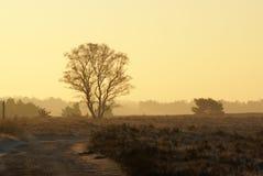 Baum im Sonnenaufgang Stockbilder