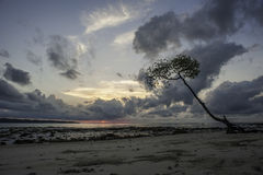 Baum im Sonnenaufgang Stockbild