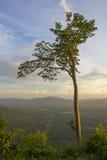 Baum im Sonnenlicht Stockfotos