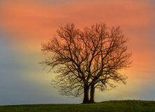 Baum im Sonnenuntergang Lizenzfreies Stockfoto