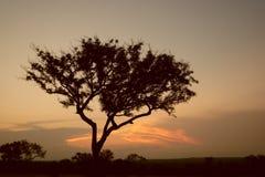 Baum im Sonnenuntergang Stockfoto