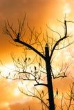 Baum im Sonnenuntergang mit Stockbilder