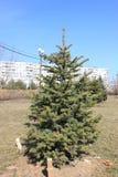 Baum im Stadt Park Lizenzfreies Stockbild