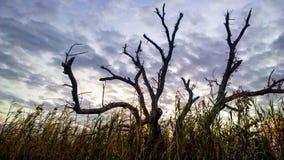 Baum im Sumpf Lizenzfreies Stockfoto
