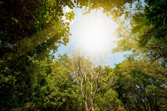 Baum im Wald Stockbild