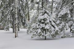 Baum im Wald unter dem Schnee lizenzfreie stockbilder