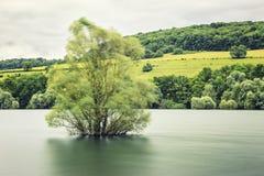 Baum im Wasser Lizenzfreies Stockbild