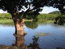 Baum im Wasser Stockbild