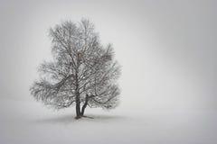 Baum im Weiß Stockfoto