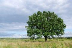 Baum im Wind Stockfoto